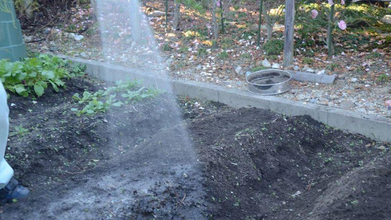 冬野菜の栽培記録3 土岐市 家庭菜園検索