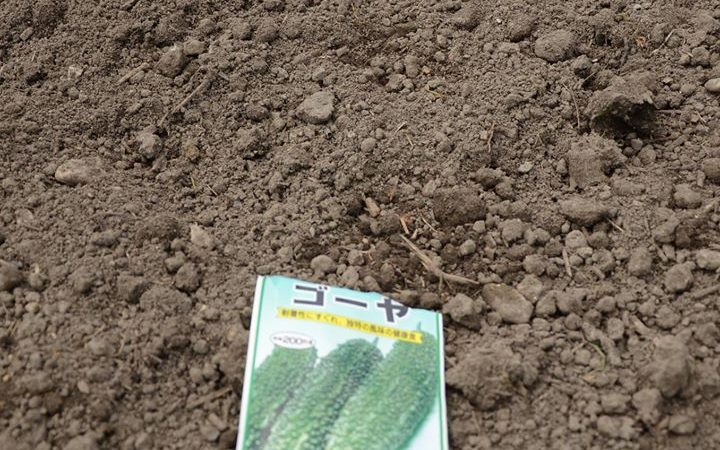 夏野菜の種まき。 土岐市畑土検索
