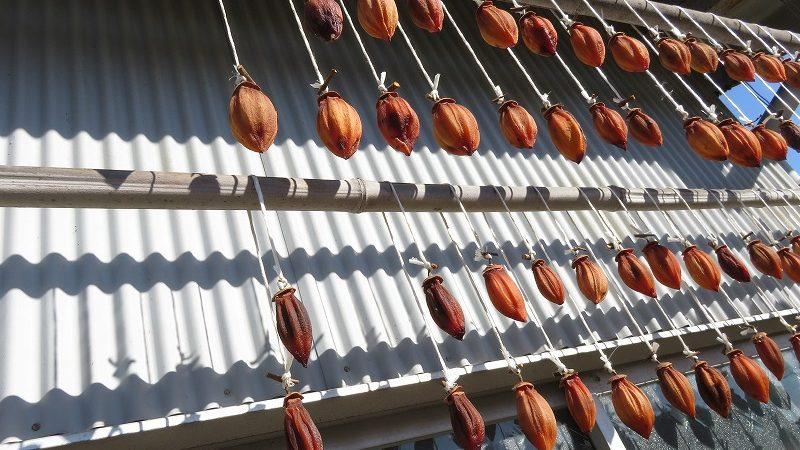 固くならない干し柿の保存の仕方